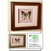 Картина панно бабочка Граф Андрокл, 10 д