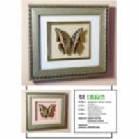 Картина-панно Бабочка Харакс Кастор 173с