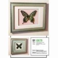 Картина панно бабочка Фармакофагус Антенор , 36 c