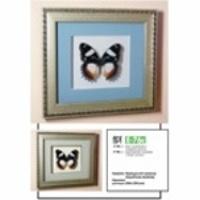 Картина-панно Бабочка Французский триколор 76с