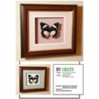 Картина-панно Бабочка Французский триколор 76д